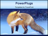 PowerPoint Template - Backlit Red Fox