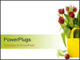 PowerPoint Template - fresh tulips on white background with copyspace