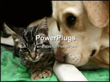 PowerPoint Template - Labrador retriever and a small kitten happy together