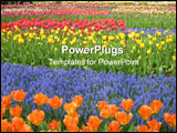 PowerPoint Template - a garden of beautiful and colouful flowers