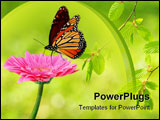 PowerPoint Template - Fresh pink gerbera flower and monarch butterfly