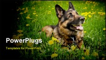PowerPoint Template - German Shepherd on the meadow with dandelions