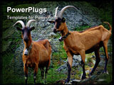 PowerPoint Template - Alp goats on rocks with big horns