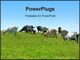 PowerPoint Template - A Goats with different colors in farm.