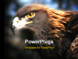 PowerPoint Template - golden eagle
