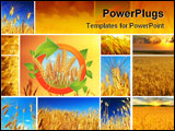 PowerPoint Template - Wheat field collage conceptual collection of growth