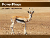 PowerPoint Template - A graceful Thomson Gazelle beautiful posing for a photograph