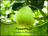 PowerPoint Template - Grapefruit on a branch in a house garden