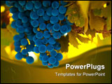 PowerPoint Template - ripe blue grape bunch very shallow focus