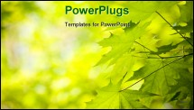 PowerPoint Template - Maple leaves background