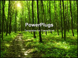 PowerPoint Template - a path is in the green forest