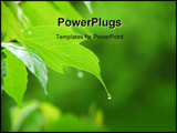 PowerPoint Template - macro of young green leaf with hanging raindrop
