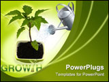 PowerPoint Template - Growing green plant on a white background
