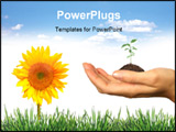PowerPoint Template - Fresh Elements of Spring: Grass Seeling and Sunflower on White. Easily Extract for your Designs.