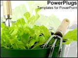 PowerPoint Template - A pot of freshly grown green lettuce.