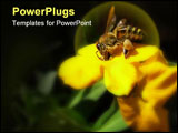 PowerPoint Template - Bee collecting honey on yellow flower. Isolated dark background