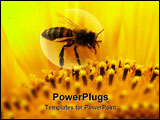 PowerPoint Template - The flowers of sunflower are given by a lot of pollen and nectar.