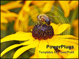 PowerPoint Template - Bee sitting on yellow colored flower in backside macro view