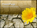 PowerPoint Template - California desert sunflower above parched cracked soil in Anza-Borrego State Park