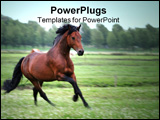 PowerPoint Template - chestnut horse. blurry in original size but ok for small/websize use.