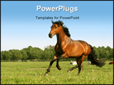PowerPoint Template - running chestnut horse