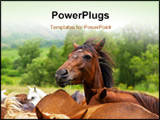 PowerPoint Template - The Horses on the summer green field
