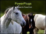PowerPoint Template - Some beautiful horses out in the field