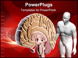 PowerPoint Template - Digital illustration of brain and human body in colour background