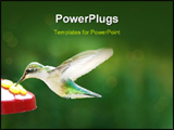 PowerPoint Template - Humming Bird