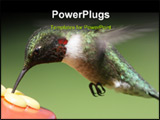 PowerPoint Template - uby-throated Hummingbird (archilochus colubris) close-up at a feeder with a green background ** Not
