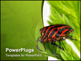 PowerPoint Template - Insects are a class within the arthropods that have a chitinous exoskeleton, a three-part body