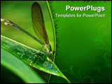 PowerPoint Template - Insect macro Laos. Butterflies, beetles, caterpillar, beetles