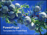 PowerPoint Template - Berries of juniper on the blue sky
