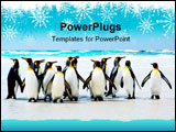 PowerPoint Template - King Penguins at Volunteer Point Falkland Islands