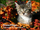 PowerPoint Template - Kitten sitting inside a fall wreath.