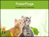 PowerPoint Template - A gray and yellow kitten sit next to colorful flowers on a white background