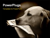 PowerPoint Template - labrador retriever bringing daily news