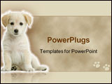 PowerPoint Template - puppy labrador retriever cream in front of white background and facing the camera