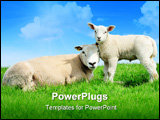 PowerPoint Template - Mother sheep and her lamb in spring Friesland The Netherlands