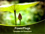 PowerPoint Template - a brotherly care or leadership shield conceptual with plant from the garden