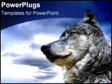 PowerPoint Template - Lone wolf in front of stormy skies.