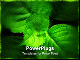 PowerPoint Template - Green leaves close-up - spiral of life, genesis