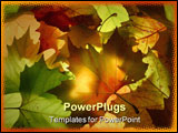 PowerPoint Template - A selection of autumn leaves which are backlit.