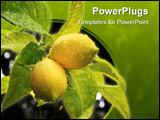 PowerPoint Template - Yellow lemons on a green stem with leafs