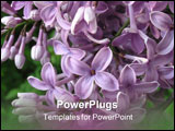 PowerPoint Template - Lilac blossom shoot from very short distance.