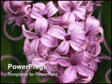 PowerPoint Template - lilacs