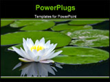 PowerPoint Template - white water-lily and its reflection