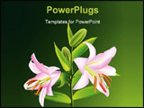 PowerPoint Template - Pink lily Liliaceous lilium isolated on green background