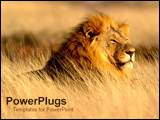 PowerPoint Template - Lion sitting in field.