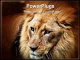 PowerPoint Template - Beautiful close up of the face of a lion